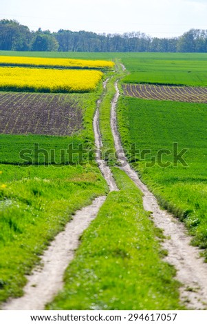 The road between the green and yellow fields