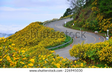 The road curves up the mountain  with Mexican Sunflower Weed Field in north of Thailand. - stock photo