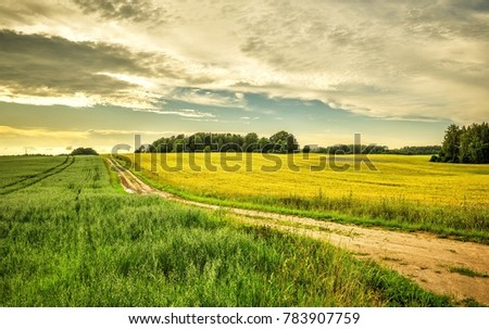 stock-photo-the-road-divides-the-yellow-