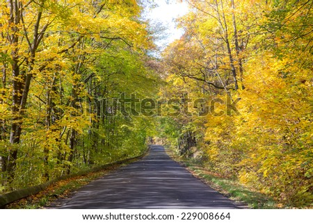 The road in the park in autumn