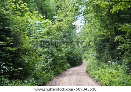 The road in the woods among tall trees and shrubs green grass