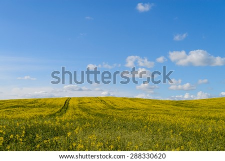 The road in the yellow rape field - stock photo