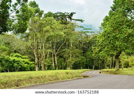 The road leading to the forest - stock photo