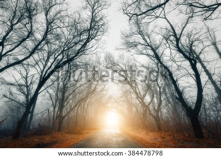 The road passing through scary mysterious forest with yellow light in fog in autumn. Magic trees. Nature misty landscape - stock photo