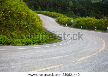 The road through the forest. - stock photo