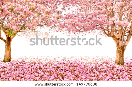 The romantic background of pink flower trees