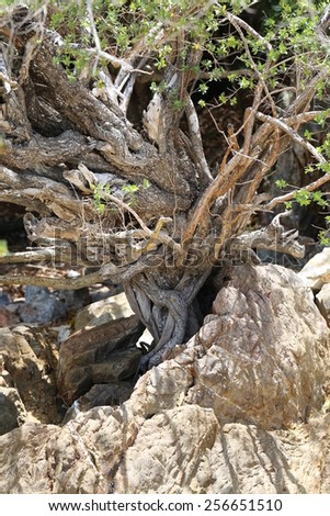 the roots of a tropical tree photographed closeup - stock photo