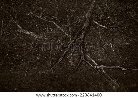 The roots of an old tree on the soil surface - stock photo