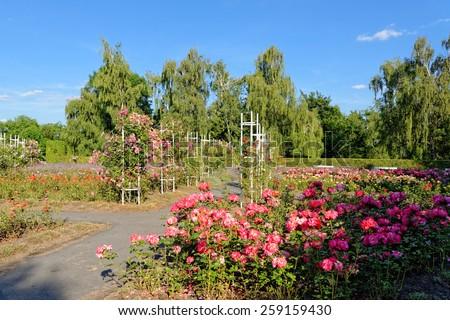 The rose garden on Petrin Hill in Prague, Czech Republic. - stock photo
