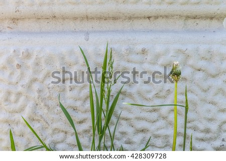 The rough gray and white texture of the wall decoration with grass. Corrugated pattern primed wall structure with green plant. Gypsum decorative design. - stock photo