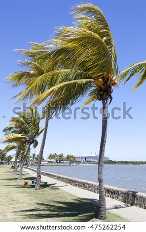 The row of palms in Lautoka, the second largest city in Fiji.