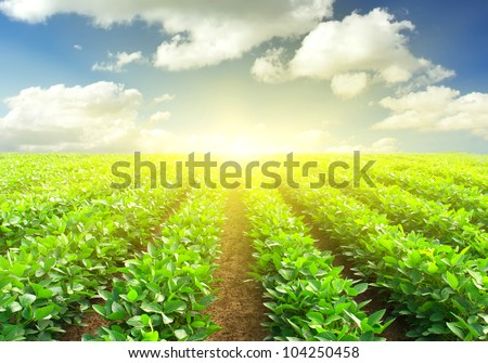 The row on the field and sunshine. Agricultural composition - stock photo