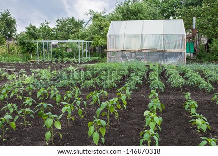 The rows of vegetable seedlings home-grown produce - stock photo