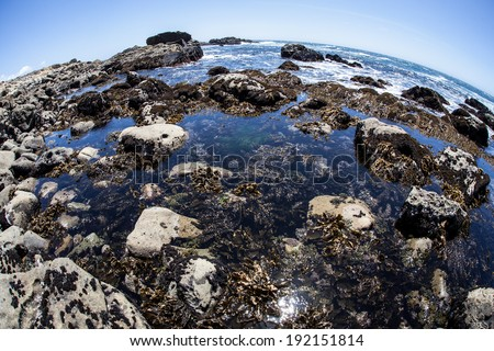 The rugged coast of northern California is home to tide pools and extensive kelp forests. This beautiful and diverse area is often exposed to heavy weather and rough seas. - stock photo