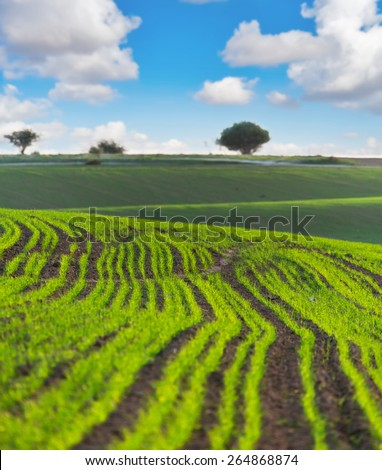 the rural landscape with ascendant agricultural crops - stock photo