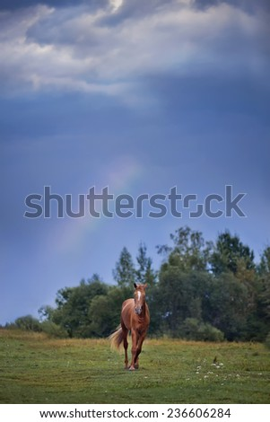 The Russian Don horse on blue sky with rainbow - stock photo