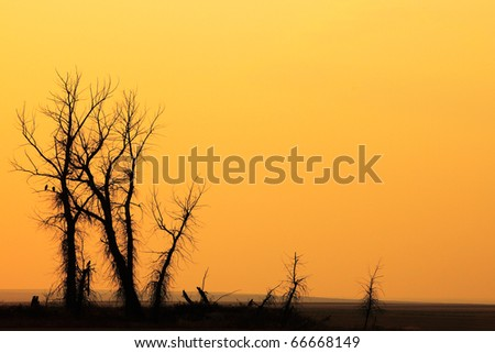 The scary silhouette of a shaggy tree against a hazy orange sky. - stock photo
