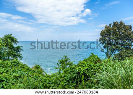 The sea and the plant under the blue sky