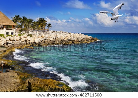 The sea coast in park near Cozumel, Mexico