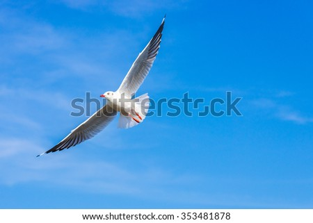 The sea gull flies on background a blue sky - stock photo