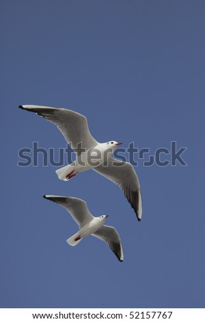 The sea gull which is 2 in a vertical and the blue sky - stock photo