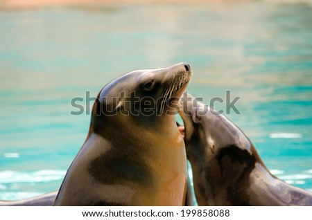 the sea lion - stock photo