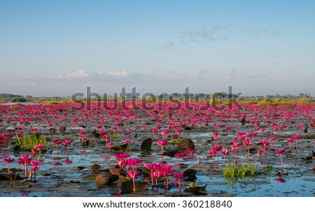 The sea of red lotus, Lake Nong Harn, Udon Thani province, Thailand - stock photo