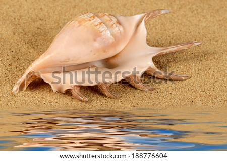 The sea shell in the sand close-up - stock photo