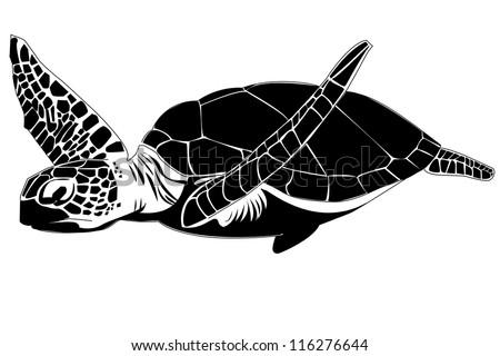 The sea turtle - stock photo