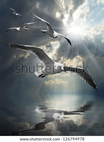 The Seagulls flying over a sea against a dramatic sky. Background from nature. - stock photo