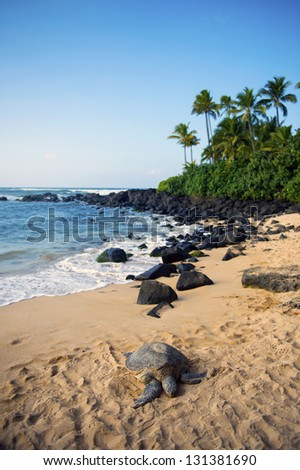 The seashore in which a sea turtle is present -1