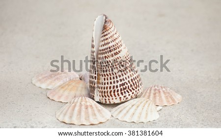 The see shells - stock photo