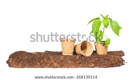 The seedling in a peat pot is on the ground next to them are some empty isolated white background - stock photo