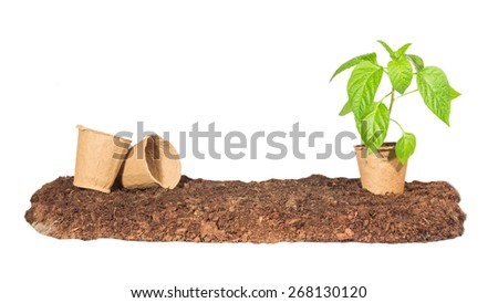 The seedling in a peat pot is on the ground next to them are some empty isolated white background