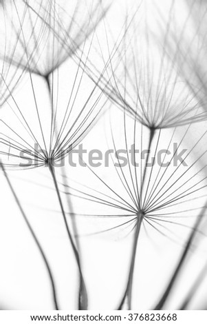 The seeds of new life. Minimalism. Macro. Natural pattern. - stock photo
