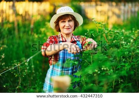 The senior woman work in the garden. - stock photo