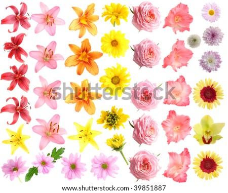 The set flowers on a white background, is isolated. - stock photo