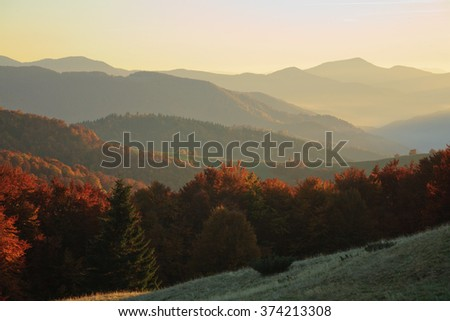 The setting sun, illuminating the hillsides covered with autumn beech forest. Ukrainian Carpathian Mountains.