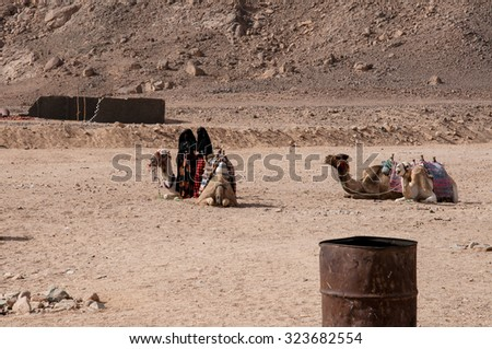 The settlement of nomads, women and camels