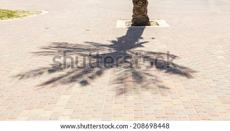 The shadow of palm trees and the dark silhouette of a man on the Mediterranean sea - Israel - stock photo