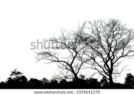 The shadows of large trees with branching branches close together with small trees with bush leaves.