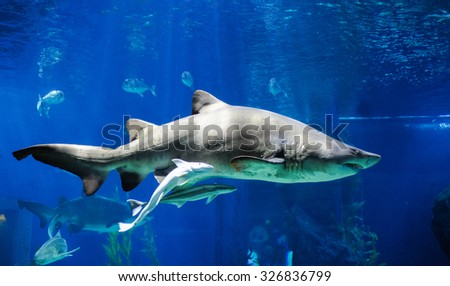The Shark in Bangkok Oceanarium