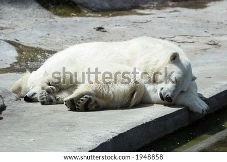 The she-bear and the bear cub sleep - stock photo