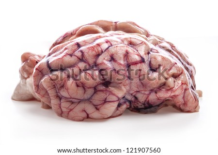 The sheep's brain isolated on white background - stock photo