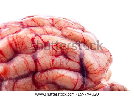 The sheep's brain on white background - stock photo