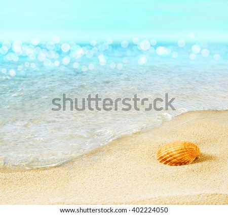 The shell on the seashore. - stock photo