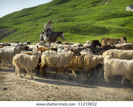 The shepherd and flock - stock photo