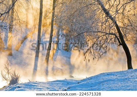 The shining gold fog at sunrise in winter wood. - stock photo