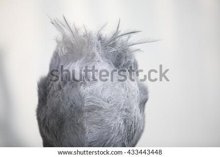 The shoebill head from backside - stock photo