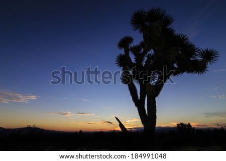 The silhouette of a joshua tree in the Mojave Desert.
